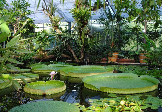 Botanischer Garten der TU Dresden - Alle Veranstaltungen