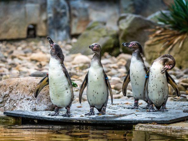 Willkommen im Zoo Dresden Foto Zoo Dresden